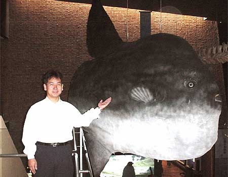 The Largest Sunfish Specimen in the World