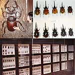 The World of Coleoptera (Beetles)