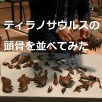 ティラノサウルスの頭骨を並べてみた