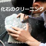 化石のクリーニング