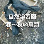 自然学習園 春~秋の鳥類