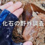 化石の野外調査